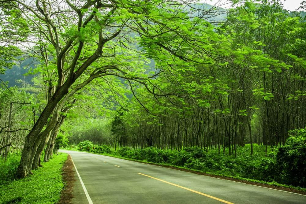 beautiful-road