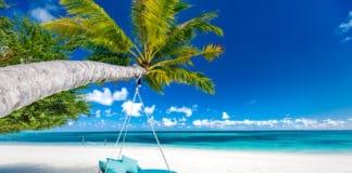 Beautiful white sandy beach with palm tree