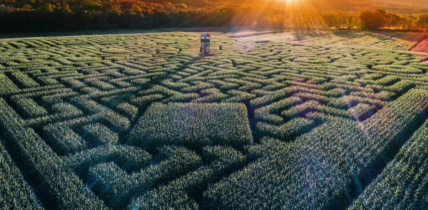 Aerial view of the huge Halloween Corn Maze in Pennsylvania, Poconos Region.