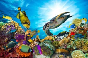 Turtle swimming above coral reef