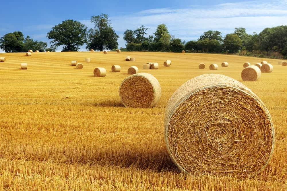 Make hay while sun shines