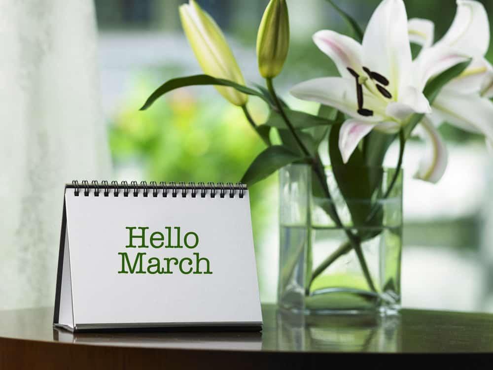 March 2020 income report