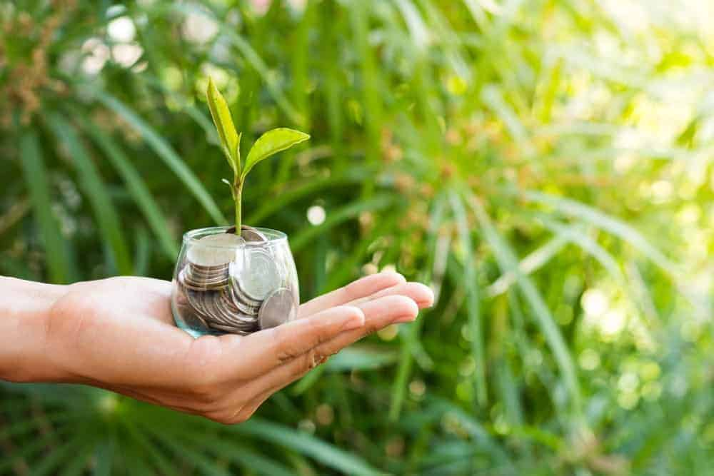 Hand holding a cup of coins with a plant.
