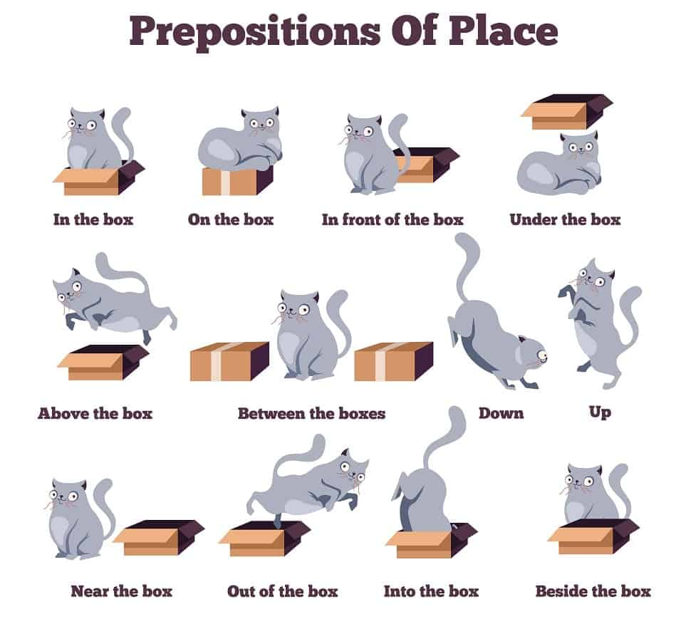Prepositions of place illustrated by a cat vector.